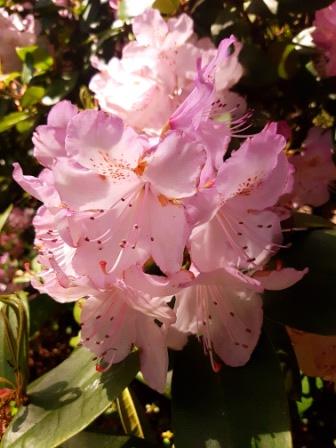 Espace Sequoia Fleurs2